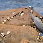 heron at the beach by Anne Scantlebury