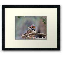 Zebra Finch Framed Print