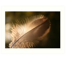journey of a feather 2 Art Print