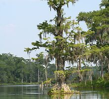 Cypress Tree by Jeff VanDyke