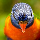 Portrait of a rainbow lorikeet by Sheila  Smart
