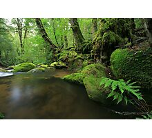 the forests of lothlorien. Photographic Print