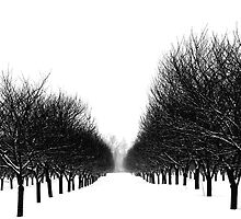 Trees in Winter by Pahl