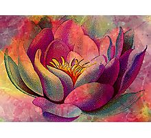 LOVELY LOTUS 2 Photographic Print