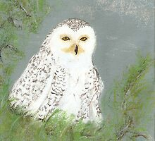 snow owl by Dawn B Davies-McIninch