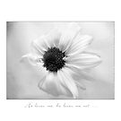 White Daisy  by LouiseK