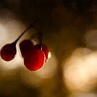 Berries by Mark Ramsell