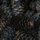 Pine Cone Macro by Stephen Thomas
