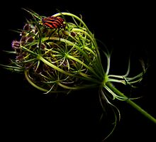 BUG on the BUD by jerry  alcantara