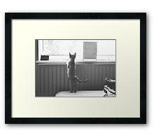 Kitten waiting Framed Print
