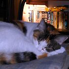 Kitty Sleep by Chris Gudger
