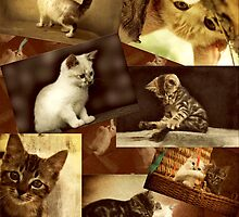 Cute Kittens at play - Collage by Qnita