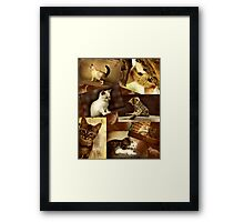 Cute Kittens at play - Collage Framed Print
