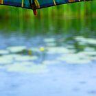 Après la pluie ... by Aimelle