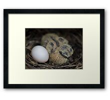 Welcome to the world... Framed Print