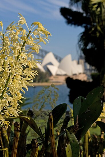 Rock Lily with the Opera House 2 by lovethrugrace