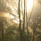 The morning sun by Graham Ettridge
