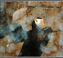 Puffin Dance: Abstract by Cherubtree