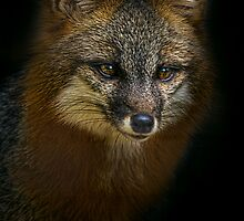 Fox Power by Cheri  McEachin