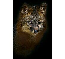 Fox Power Photographic Print
