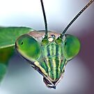 Mantis (7) by robkal