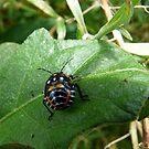 Little bug by rasnidreamer