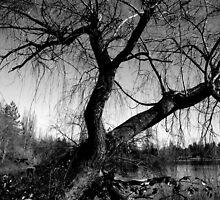 Stripped B&W by AlluringPhotos