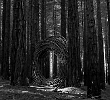 Portal by HODGEphoto