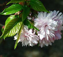 Cherry cherry. by StuartR