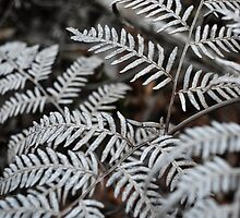 White Fern by Michelle McConnell