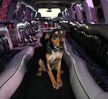 Ride with the Big Dogs by Lori Walton