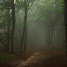Walking on in the misty forest by jchanders