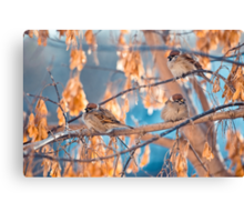 great sparrows in winter time on a branch Canvas Print