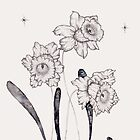 Daffodils  by samclaire