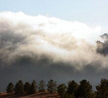 Fog Belt by Laurie Puglia