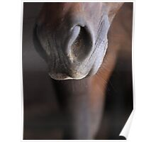 Horse Muzzle Poster