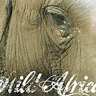 Wild Africa by Andrew Gordon