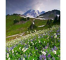 Lupine Storm Photographic Print