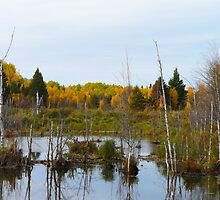 Beaver pond & dam by MaeBelle