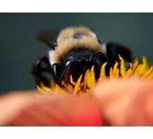 Bee's Eye View Photographic Print