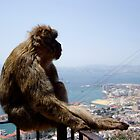 Monkey see... by Fred Shively