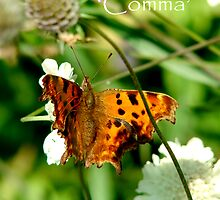 Comma by justlinda