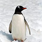 Gentoo on Ice by Rosie Appleton