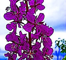 Fireweed by Francine Dufour Jones