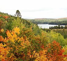 Algonquin Park by Gotcha  Photography
