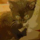 kitten calander by Donna Jordan