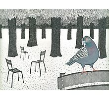 Pigeon in the Jardin de Luxembourg, Paris Photographic Print