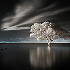 Tree in Water by CalendaRus