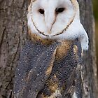 Barn Owl 2 by John Wright