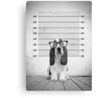 Guilty Puppy Canvas Print